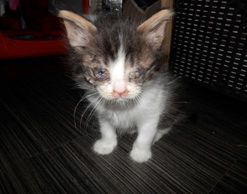 Adoptés P9074510