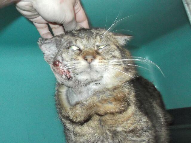 2 chats état critique fourrières RP Papyfi10