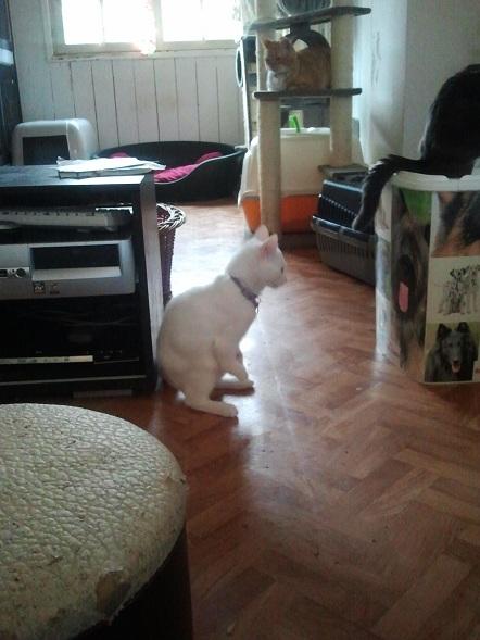 Petit Kangourou ! Photo353