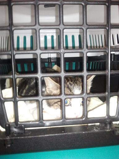 Vétérinaire Photo545
