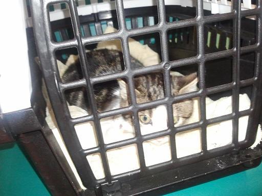 Vétérinaire Photo546