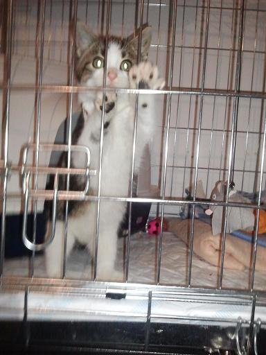 Vétérinaire Photo547