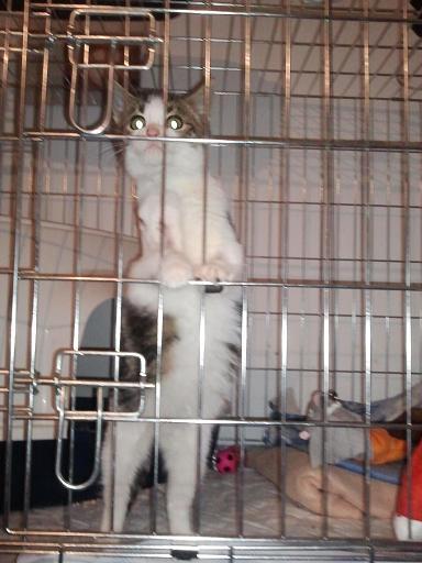 Vétérinaire Photo548