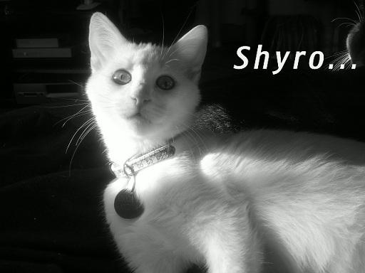 Portrait... Shyro10