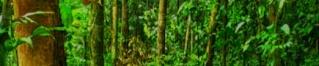 La Forêt Pluviante (Gardolania)