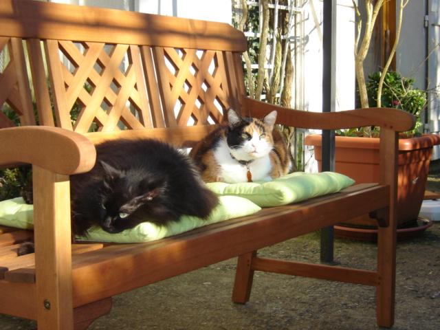 EXQUISE, chatte européenne noire à poils longs, née le 01/12/2009 Dsc01010