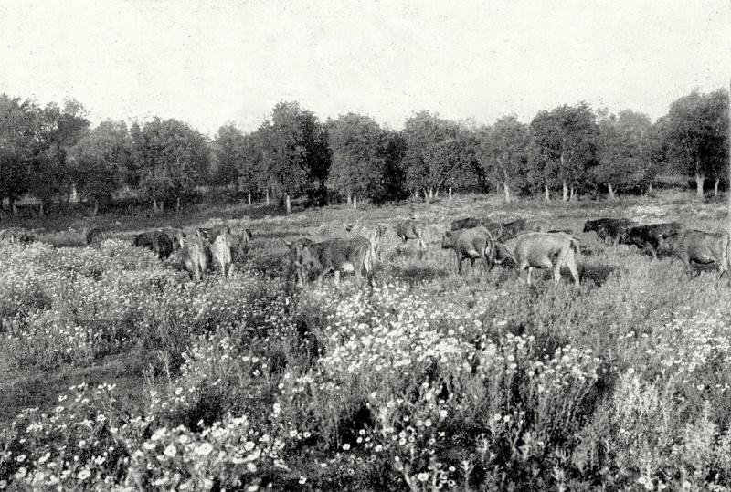 Le MAROC en 1932 Jc_l_p63