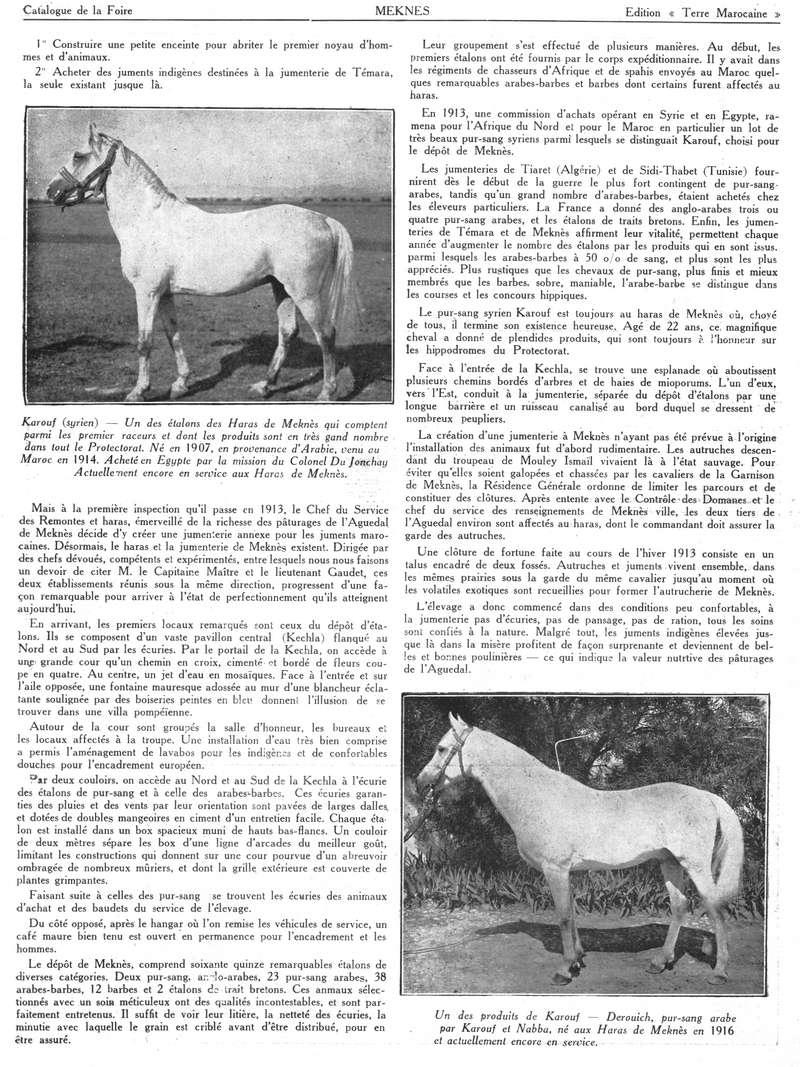 Foire de Meknès - Page 4 Swsca175