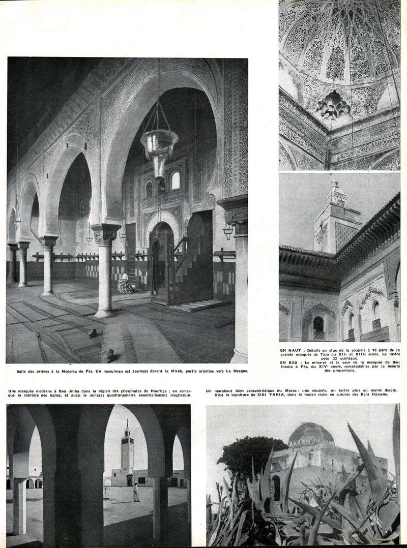 MAROC Terre d'Avenir - Page 2 Swsca218