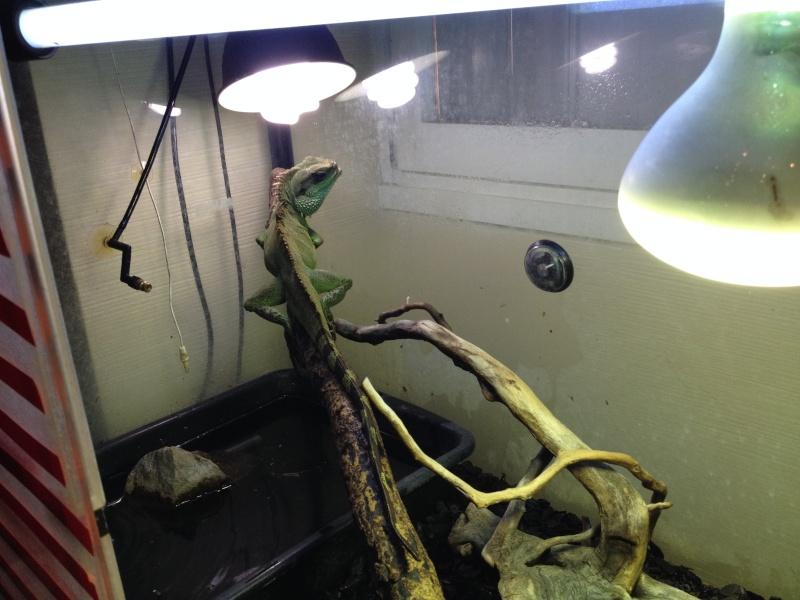 Solar Raptor Img_1014
