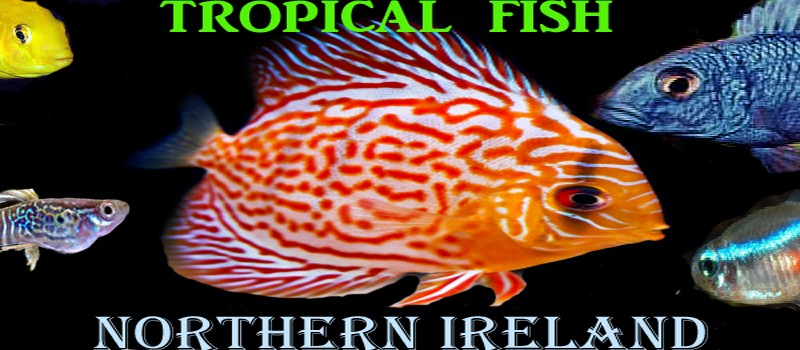 Tropical Fish Northern Ireland | Tropical Fish NI