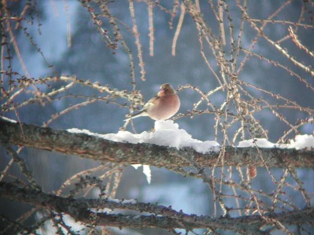 """Concours """"Paysage d'hiver avec animal"""" - Page 2 Dscn0810"""