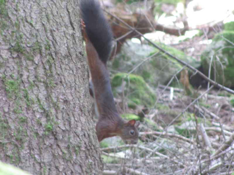 mes modestes photos animalières Img_6323