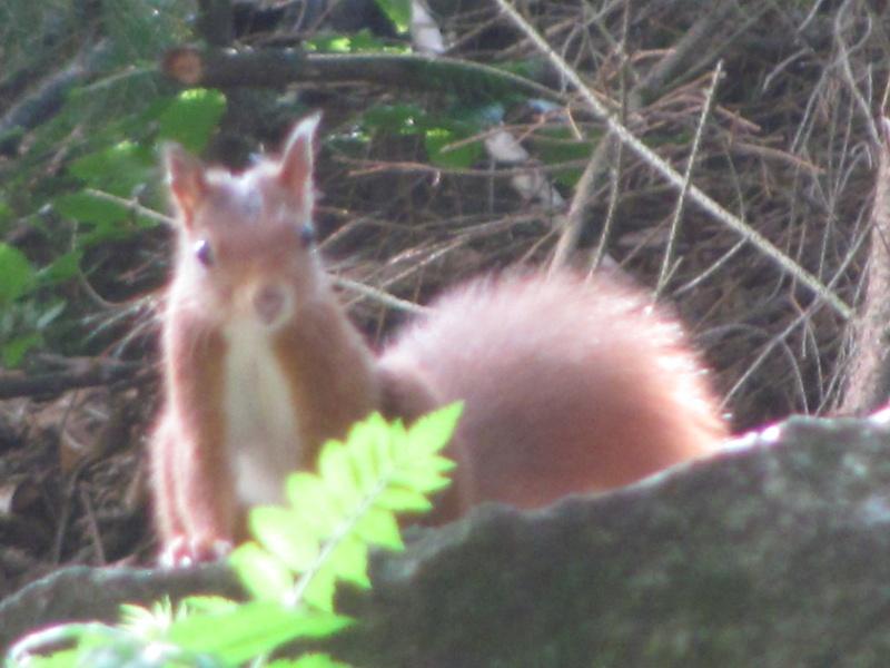 mes modestes photos animalières Img_7441