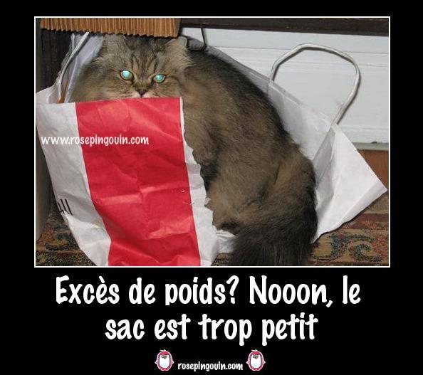 Images comiques du web (TF ou pas) - Page 8 Excas_10