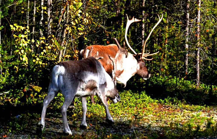 ... Гуляют там животные невиданной красы! Olen_310
