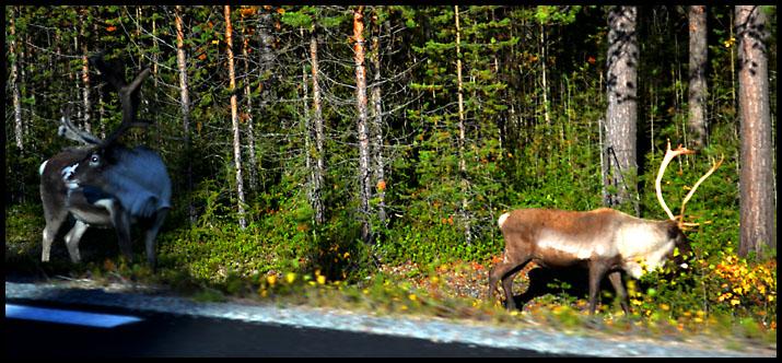 ... Гуляют там животные невиданной красы! Olen_710