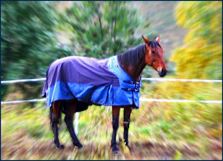 ... Гуляют там животные невиданной красы! Slov_k10