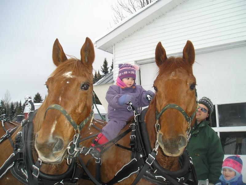 Mes amis les chevaux P3110010