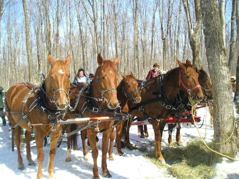 Mes amis les chevaux P3110012