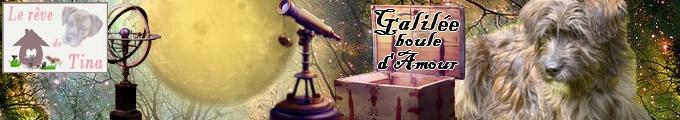 Cabriole (ex Galilée), boule d'amour de 1 an  Galila10