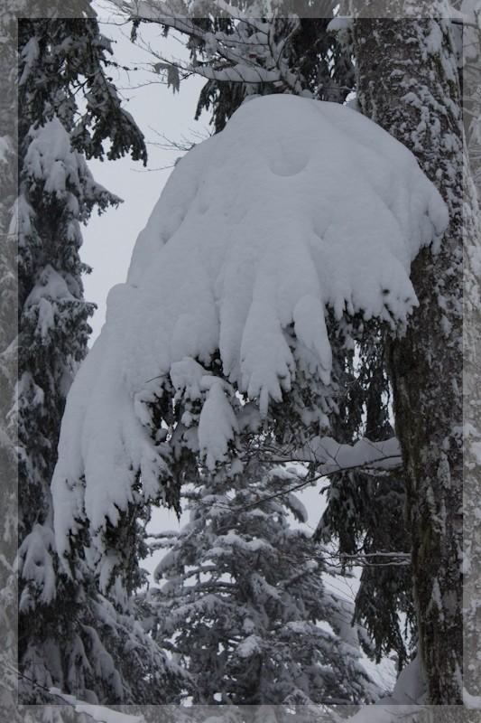 Le temps de ce week end... encore de la neige ! Img_7610