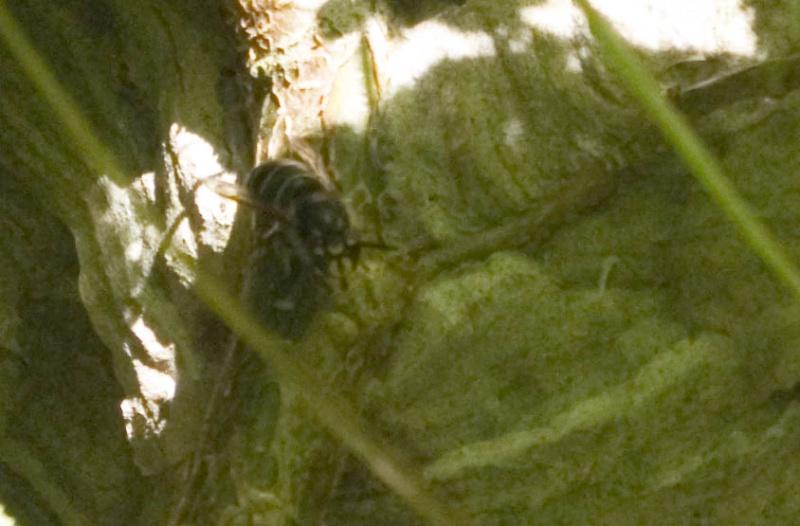 nids très gênants ! _igp1614