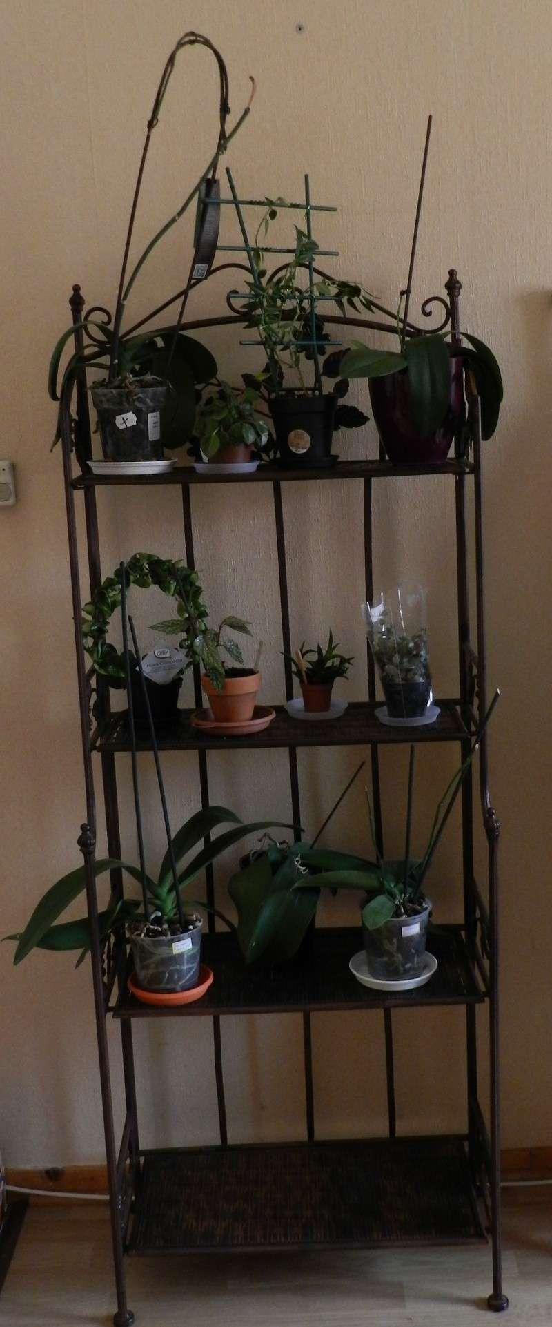 Mes plantes ont un nouvel habitat!!! - Page 4 Dscn3623