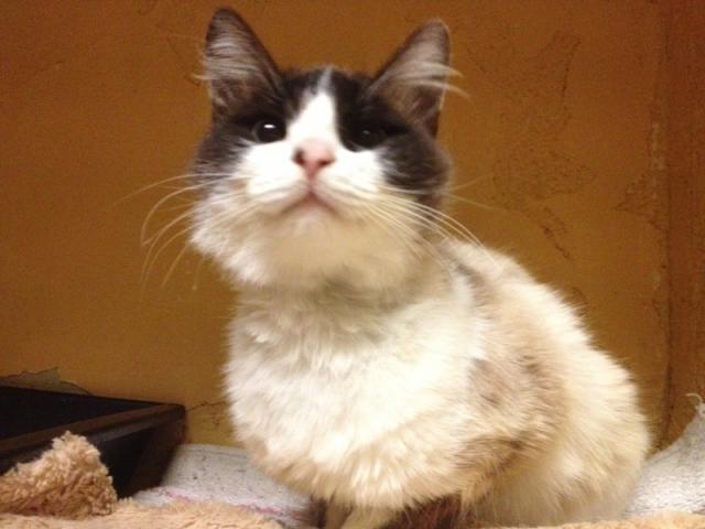 Photos des chats sauvés, avant/après - Page 7 14175210