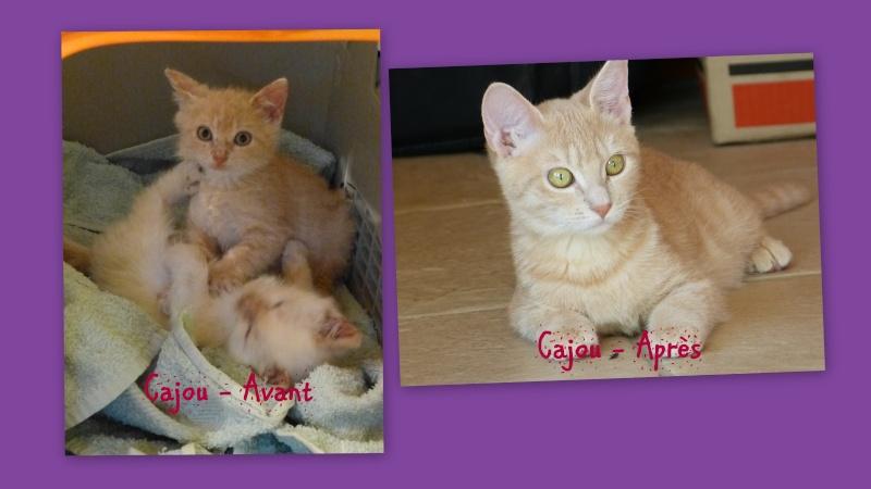 Photos des chats sauvés, avant/après - Page 7 2015-010