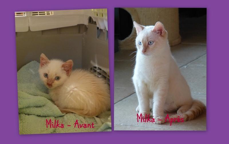 Photos des chats sauvés, avant/après - Page 7 2015-011