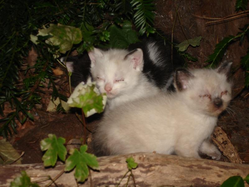 Photos des chats sauvés, avant/après - Page 7 Jade_j10