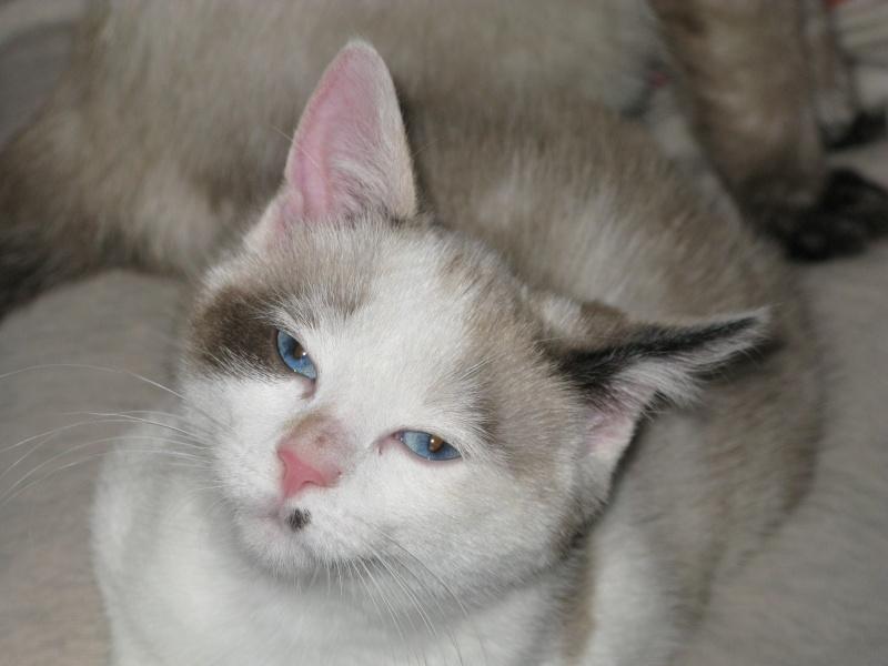 Photos des chats sauvés, avant/après - Page 7 Jasmin11