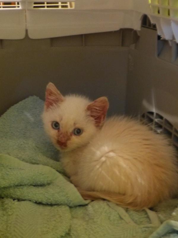 Photos des chats sauvés, avant/après - Page 7 P1050910