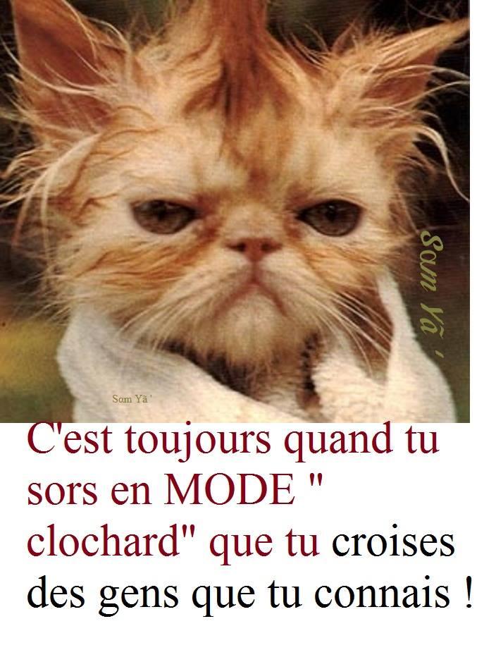 GRIMACES DE CHATS - Page 2 10429811