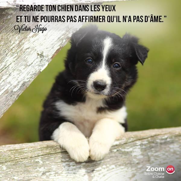 citations sur le chien - Page 2 10443610