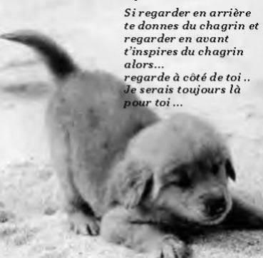 citations sur le chien - Page 4 10885511