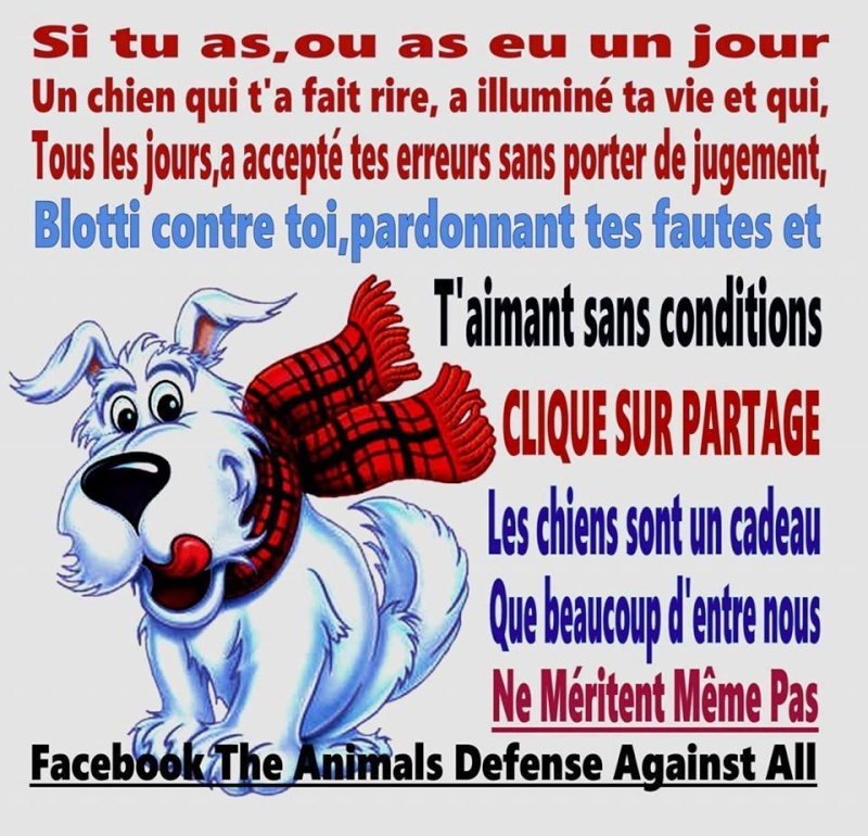 citations sur le chien - Page 4 10896810