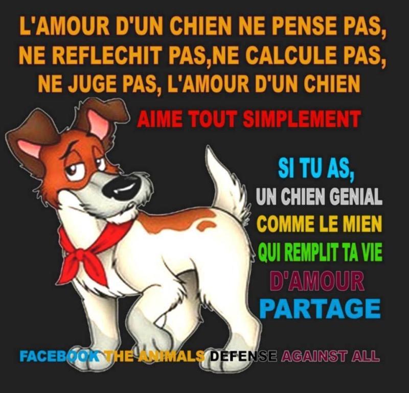 citations sur le chien - Page 3 10915310