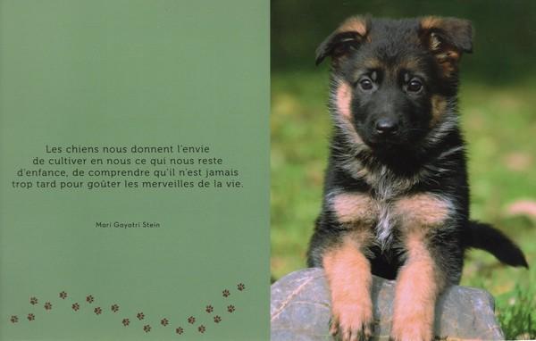 citations sur le chien - Page 3 13432710