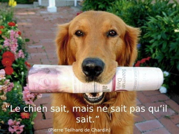 citations sur le chien - Page 3 30386710