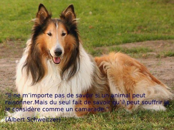 citations sur le chien - Page 3 30386712