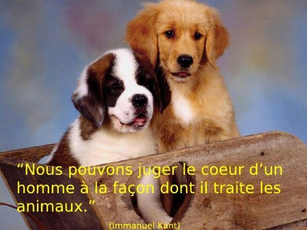 citations sur le chien - Page 4 30386714