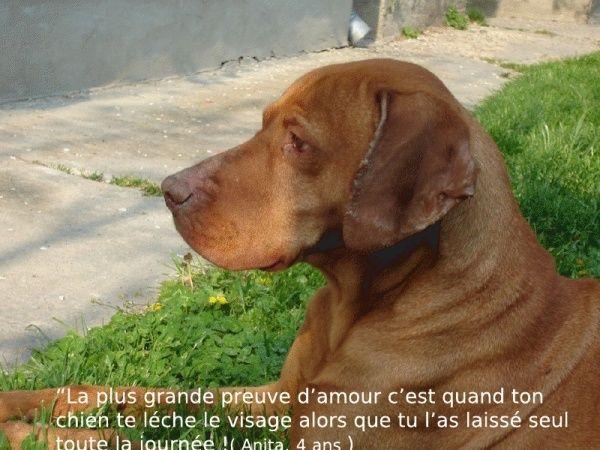 citations sur le chien - Page 4 30386716