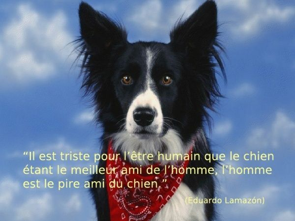 citations sur le chien - Page 4 30386717
