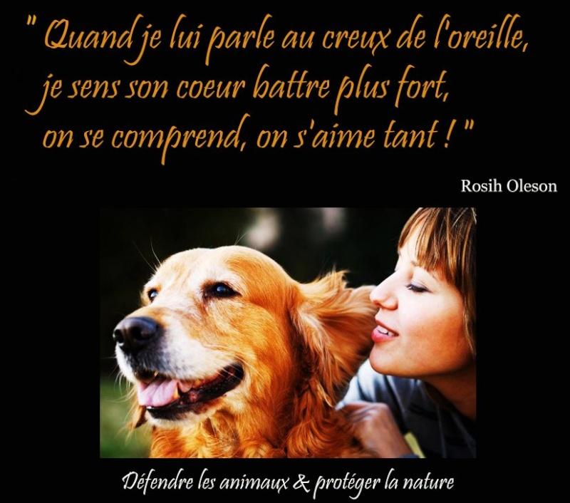 citations sur le chien - Page 4 40753011
