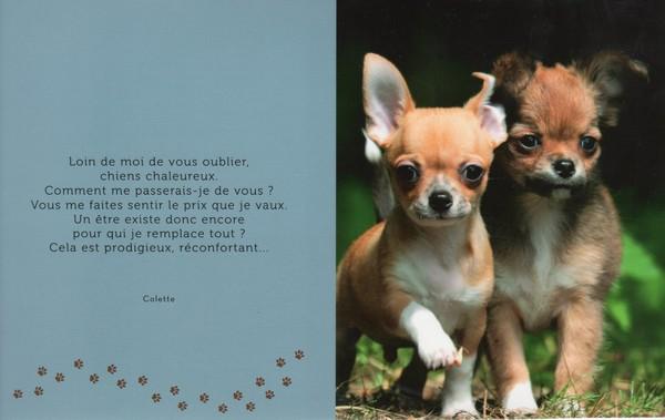 citations sur le chien - Page 3 46920d10