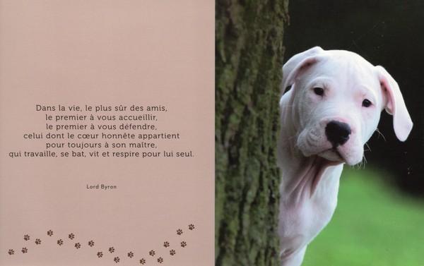 citations sur le chien - Page 4 499a5d11