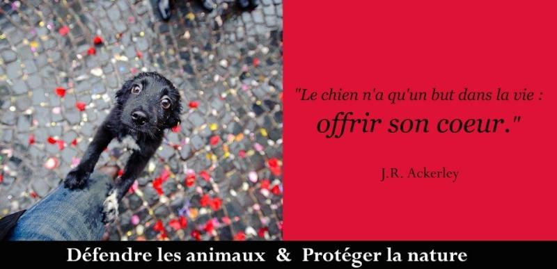 citations sur le chien - Page 2 53995810