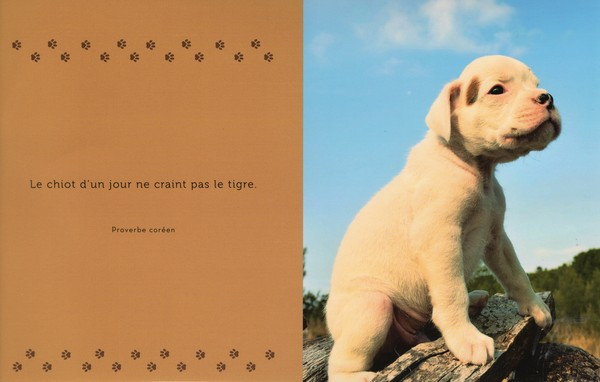 citations sur le chien - Page 2 90664810